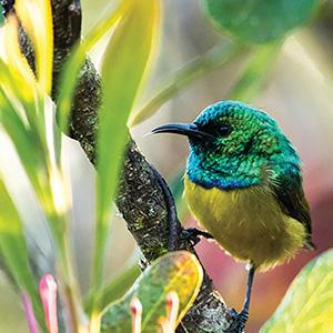 Birding in the Eastern Highlands